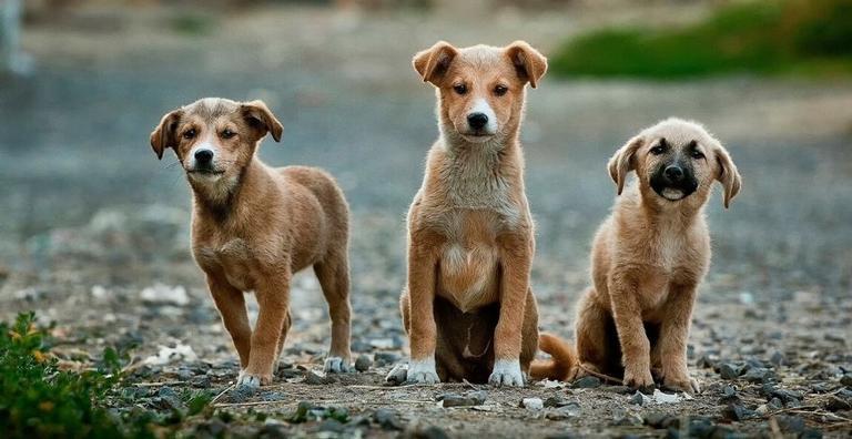 Conheça os nomes de cachorro mais comuns no Brasil| Recreio