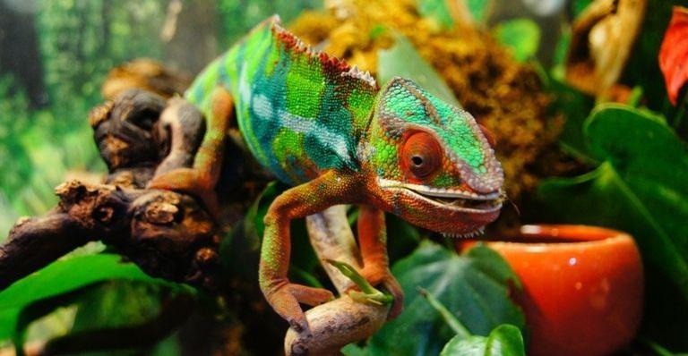 Entenda como funciona a habilidade destes animais de se camuflar com outras cores